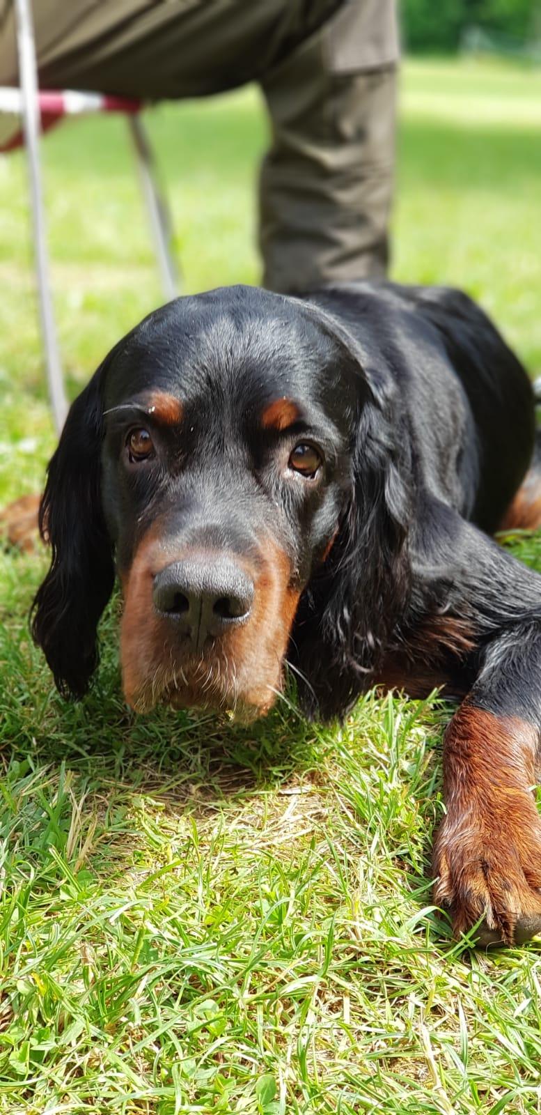 unser Zeltlagerhund